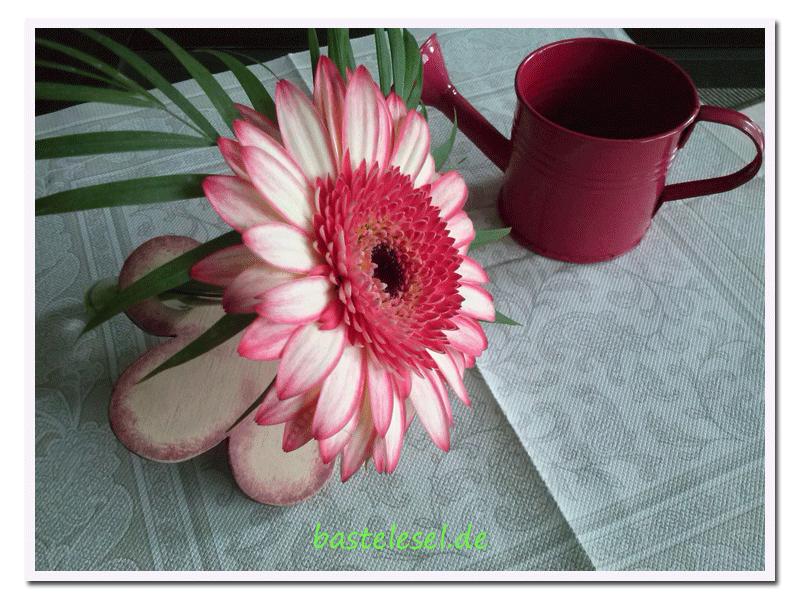 Singleflower1