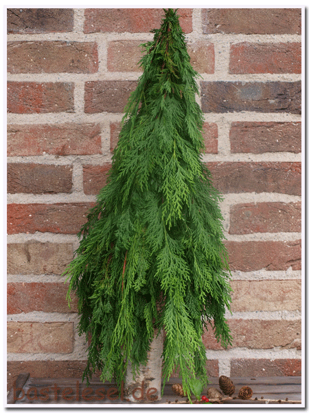 Baum1